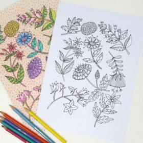 Floral Specimen