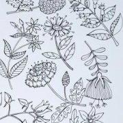 Floral Specimen cropped 2